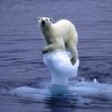 IJsbeer op smeltent poolijs